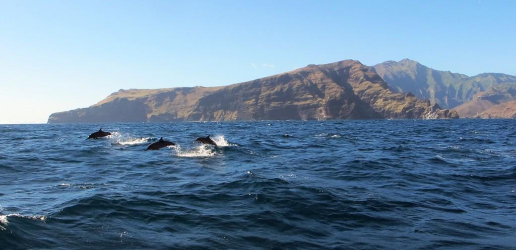 Dolphins Wishing SY Amandla Bon Voyage From Nuku Hiva Image Courtesy The Captain