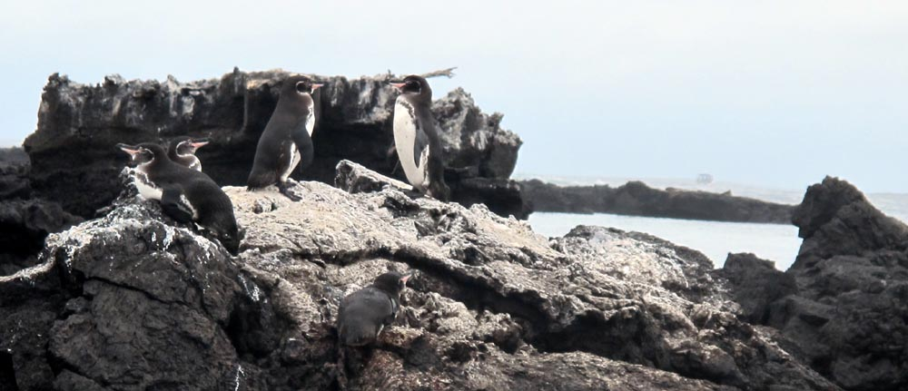 Penguins on the Lava Tunnels