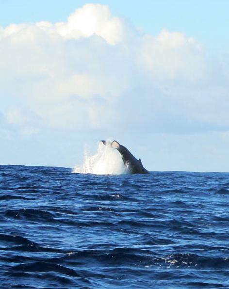 Molokai - January 2014 - Whales (6)