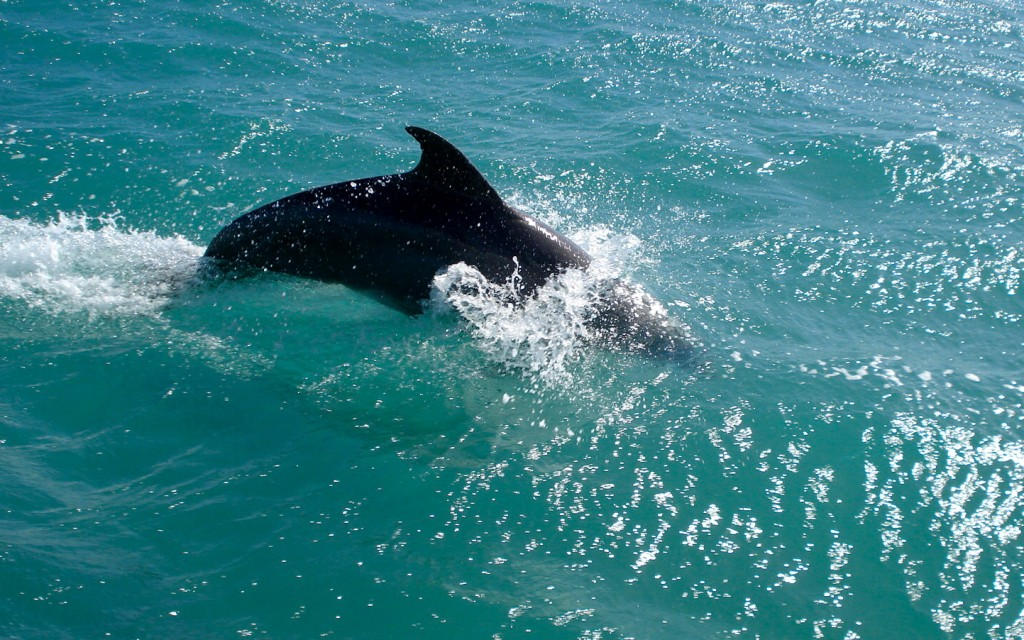 1st Dolphin Sighting While Sailing To The Bahamas in 2008