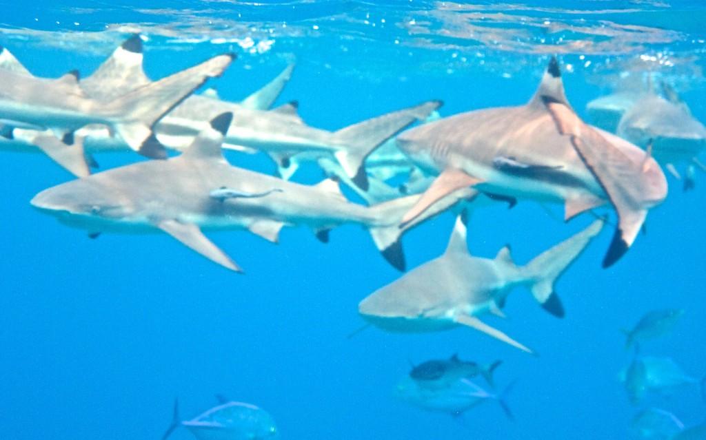 Shark City (1)