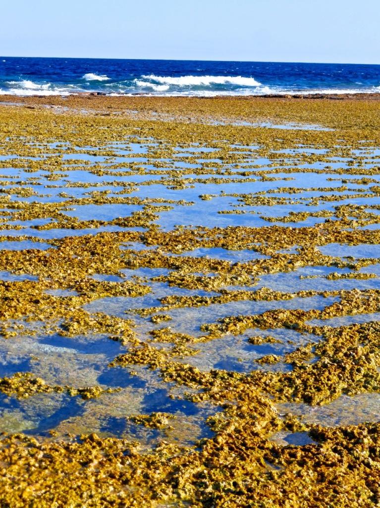 Minerva Reef - October 2014 - Reef View