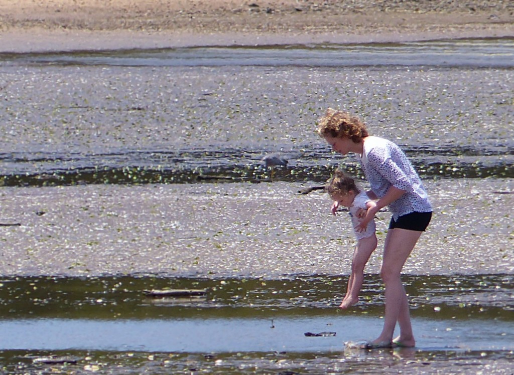 New Zealand - January 2015 - Low Tide (5)