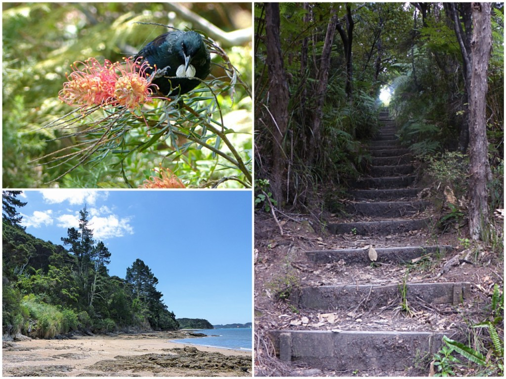 New Zealand - January 2015 - Walk Collage