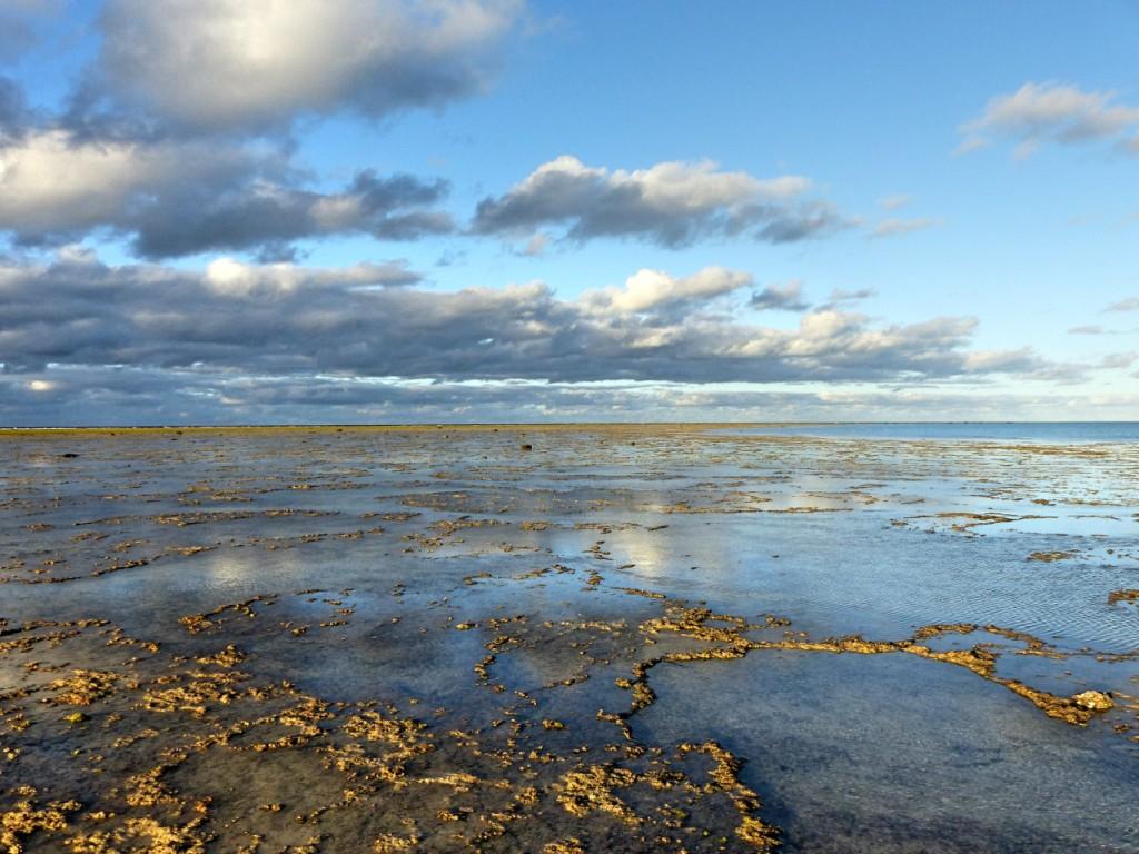 Walking North Minerva Reef (1)