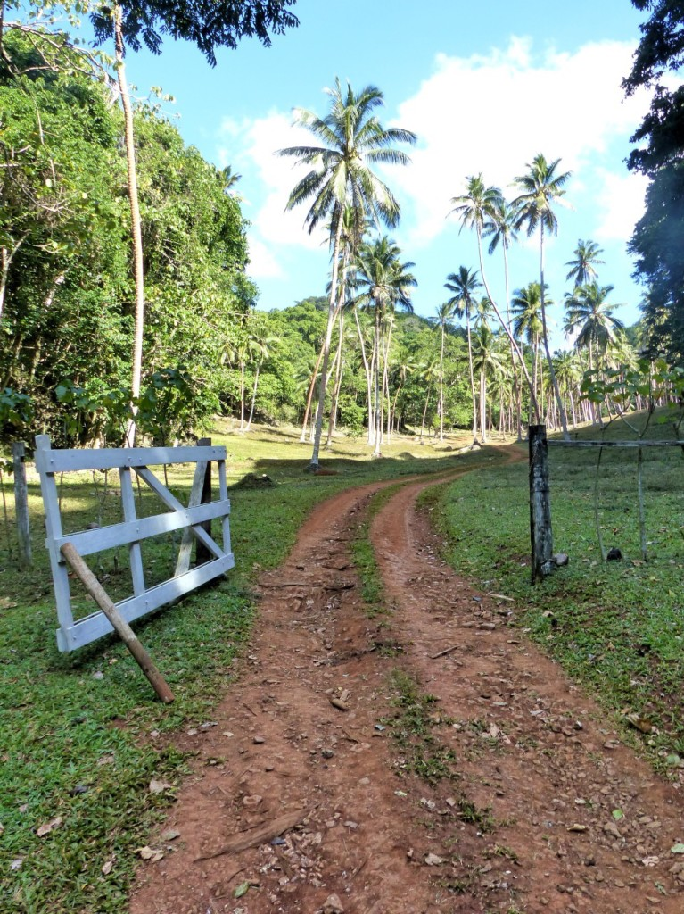 Entrance to Nabavatu Plantation