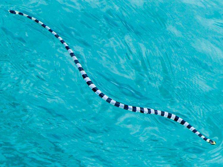 Eek! A Snake