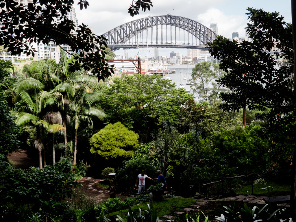 Harbor Bridge Viewed From Wendy's Secret Garden