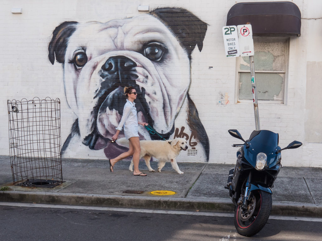 Dogs of Bondi