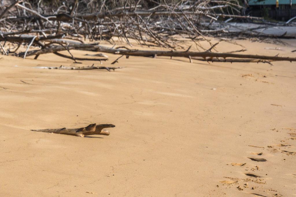 Fraser Island Wooden Crocodile