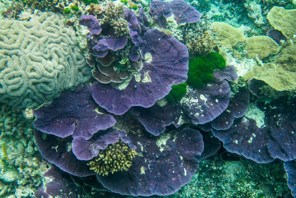 Coral Off Heron Island