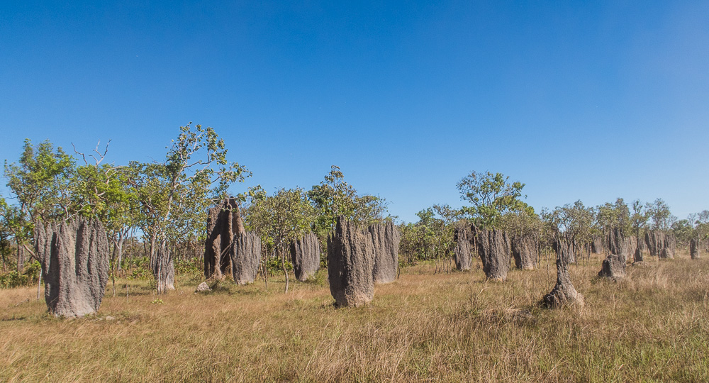 Termite Mounds En Route To Litchfield