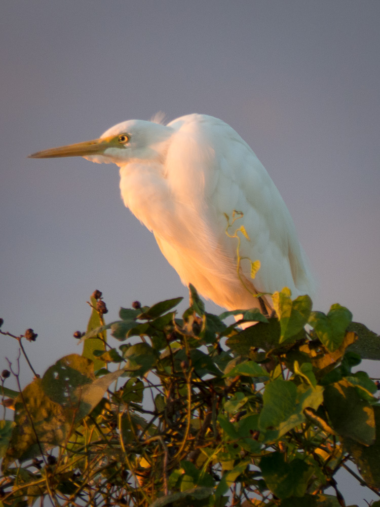 Yellow River Bird At Sunrise