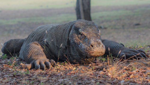 August Part II: Alor to Komodo National Park